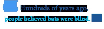 bats blind