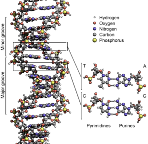 definition of dna definition of rna definition